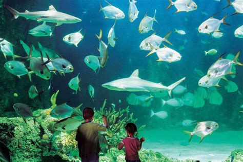 the top 10 amazing place to visit in sydney india tours and travels