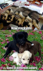Funny Cute Puppies Dogs