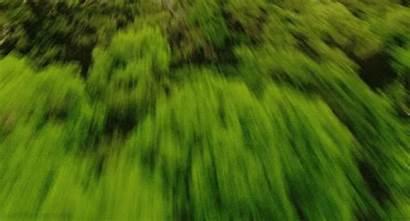 Rainforest Forest Gifs Animated Dia Okay Meio