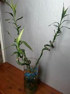 Grande Plante D Intérieur Facile D Entretien : entretien bambou interieur maison design ~ Premium-room.com Idées de Décoration