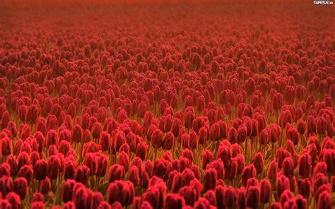 Schöne Gräser Für Den Garten by Die 70 Besten Hintergrundbilder Fr 252 Hling