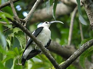 List of birds of Madagascar - Wikipedia