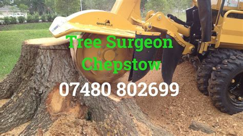 tree surgeon chepstow tree removal root  stump removal
