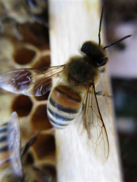 bienenvolk kaufen bienen und bienenv 246 lker kaufen dhd24