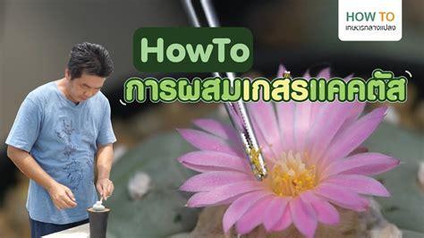 How To Kasetkangplang l EP.3 วิธีผสมเกสรแคคตัส - YouTube