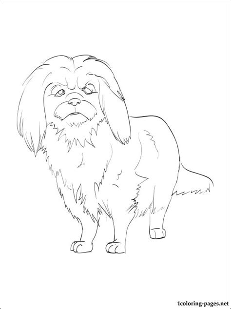 pekingese coloring page coloring pages