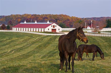 sagamore farm horses md grazing blackburn horse farms they stables glyndon field breeding champions blackburnarch architects