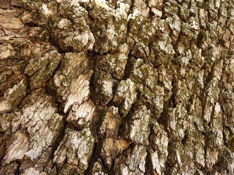 tree barks mlewallpapers com tree bark ii