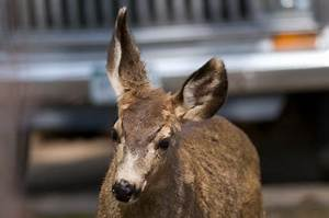 Plymouth Rock Insurance Company Does Car Insurance Cover Hitting A Deer Car Insurance