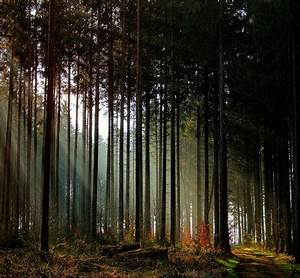 Amazing, Autumn, Forests, 15, Photos
