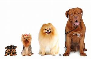 16 best dog breeds to along with kids