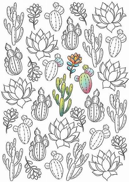 Printable Patterns Cactus Coloring Pages Succulent Plants