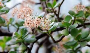 Meerrettich Blüht Was Tun : geldbaum bl ht so bringen sie ihn zum bl hen ~ Lizthompson.info Haus und Dekorationen
