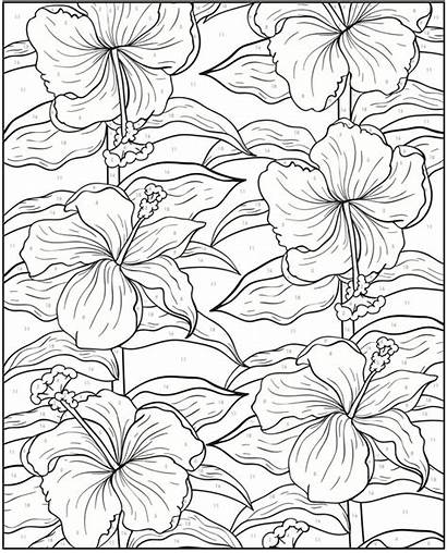 Coloring Pages Dover Creative Number Publications Doverpublications
