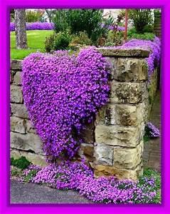 539 best jardin et plante images on pinterest With idee amenagement jardin rectangulaire 7 amenagement dune terrasse deco avec un voile dombrage
