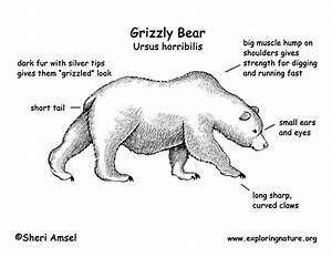 Polar Bear Diagram Label
