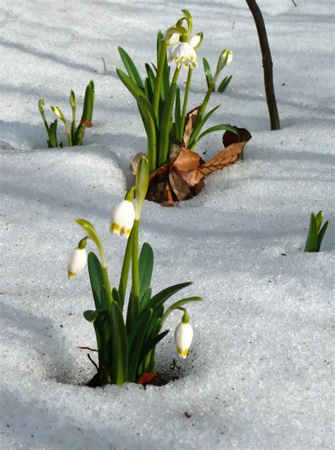 dateischweineberg zwei maerzenbecher im schnee jpg