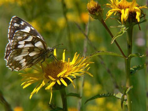 Garten Pflanzen Schmetterlinge by Stauden Und Geh 246 Lze F 252 R Schmetterlinge Und Raupenfutter Im