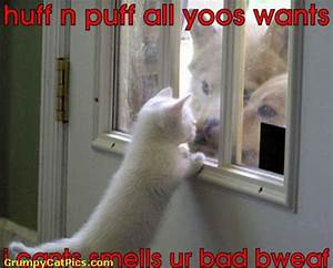 Cute Dog Pictures With Funny Captions