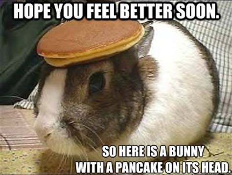 Funny Feel Better Meme - hope you feel better soon so here is a bunny with a pancake on its head pancake bunny