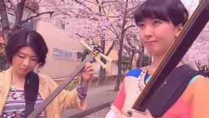 Shamisen Under The Cherry Blossoms Ii