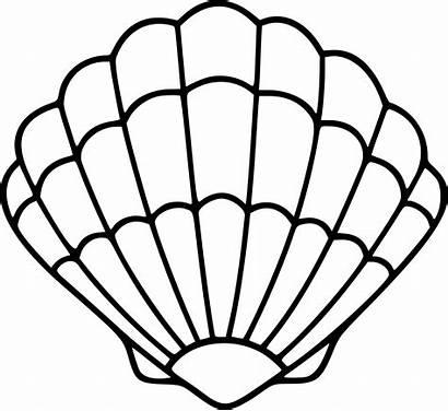 Clipart Svg Seashells Shell Sea Transparent Drawing