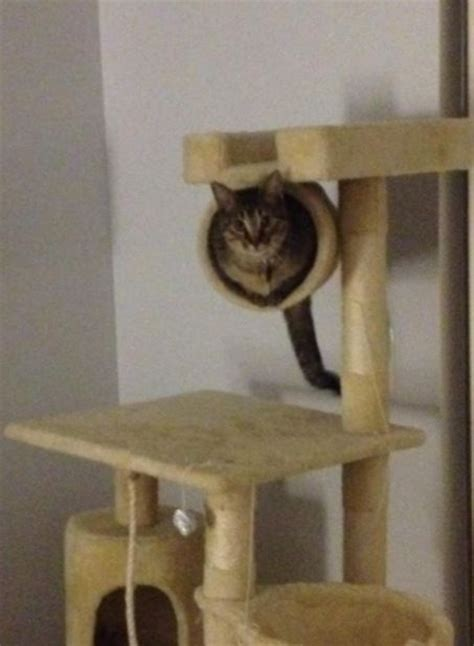 the 11 best large cat tree at the best price reviews
