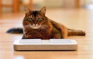Verkleidung Für Katzen : gewinnspiel design futternapf f r katzen agila ~ Frokenaadalensverden.com Haus und Dekorationen