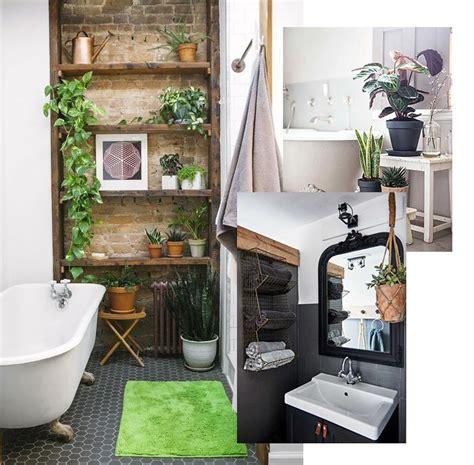 plante pour salle de bain sombre 28 images quelles plantes pour ma salle de bains plante