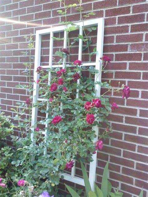 Homemade Trellis For The Sweet Peas At The Side Of House