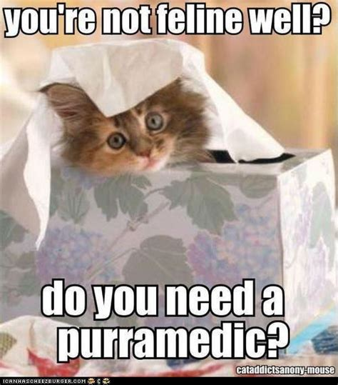 Sick Cat Meme - post your get well soon meme to violet viper general discussion official forum world of