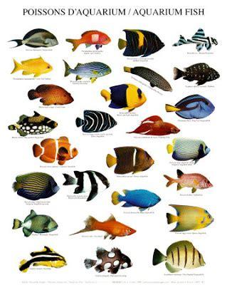 basic methods  pet care  latest fish breeds