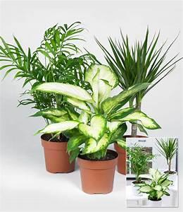 zimmerpflanzen mix 39classic39 1a zimmerpflanzen online With whirlpool garten mit zimmerpflanzen online günstig kaufen