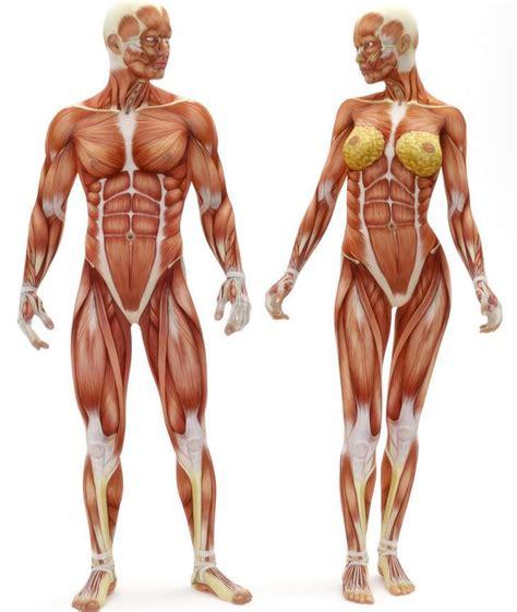 Algunos datos curiosos sobre el cuerpo humano - VIX