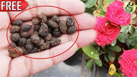 organic fertilizer goat dung sheep dung
