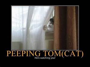 Peeping Tom(cat) | Humor | Pinterest