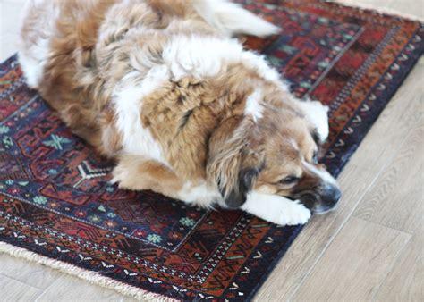 dog grooming archives dog   parks blog
