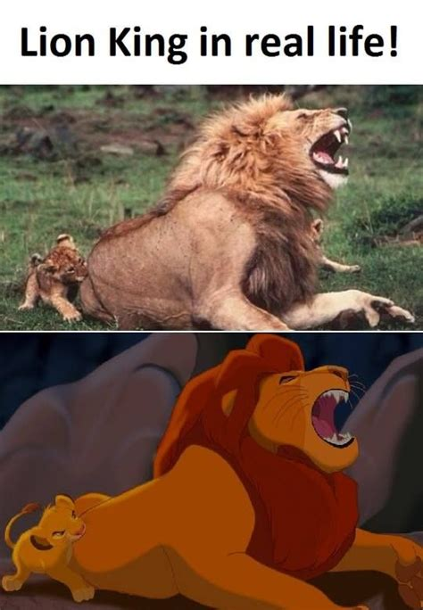 Lion King Meme - 1398 best images about lion king fan on pinterest lion king 3 simba and nala and lion king simba