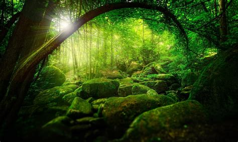 3d Green Nature Wallpaper by Nature Trees Forest Green Sun Rays Sunlight Branch