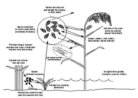 tnau agritech portal crop protection