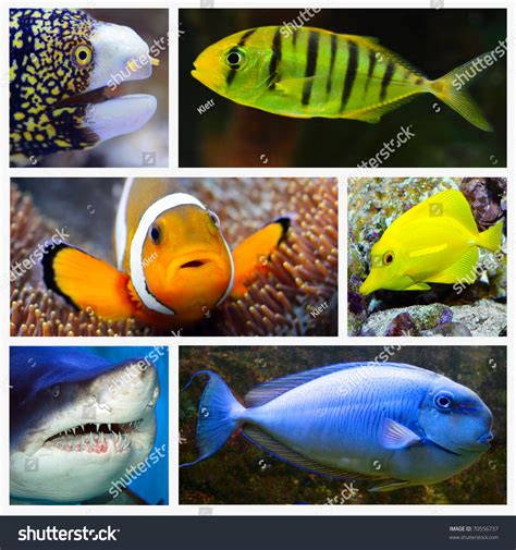 marine life collage composed pictures underwater stock