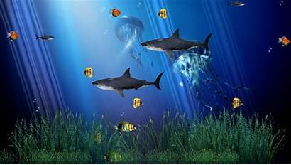 Moving Pc Wallpapers Animated Cat Fish Windows