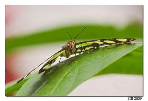 Nature Photography by Glenn Bartley - Ecuador Nature ...