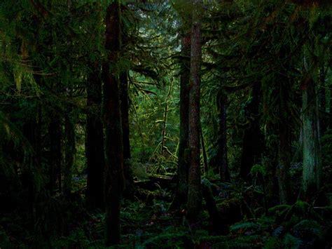 If you're looking for the best green forest wallpaper then wallpapertag is the place to be. Dark Forest Wallpapers - Wallpaper Cave