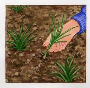Que Mettre Au Sol Pour éviter Les Mauvaises Herbes : plantes couvre sol comment les choisir et les planter ~ Dailycaller-alerts.com Idées de Décoration