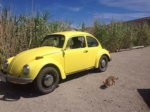 1973 Volkswagen Beetle - Overview