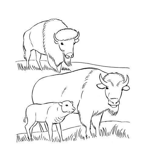 Coloring Pages To Print by Free Printable Bison Coloring Pages For