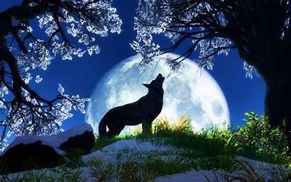 Animal Wallpapers Animals Desktop Background Nice Backgrounds