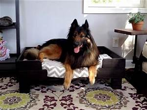Pallet dog bed or sofa projects pallets designs for Amazing dog beds