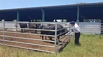 牛結節疹金門疫情連環爆撲殺逾80頭牛!疑遭中國大陸蚊蠅感染吃牛肉要注意什麼 | Yahoo懶人卡 - Yahoo奇摩新聞